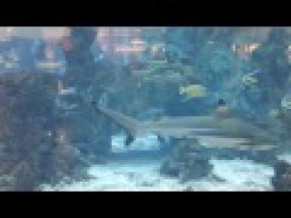 Костя в океанариуме тропические рыбки акулы / Kostya an oceanarium tropical small fishes sharks