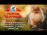 ЖЕМЧУЖИНА СЕВЕРА 07.10.2017