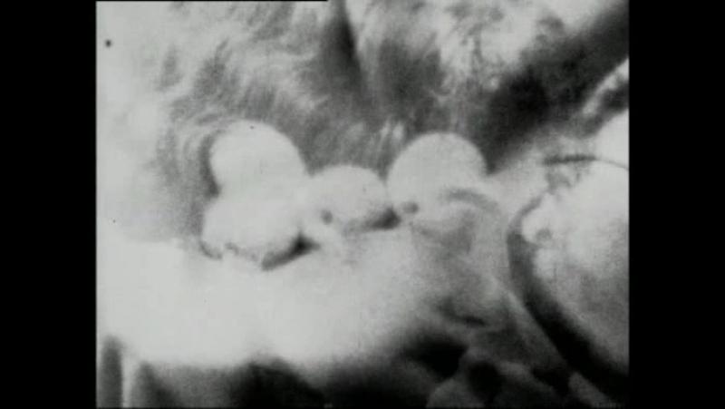 Украденные яблоки для Карен Бликсен / Stolen Apples for Karen Blixen (1973) The super8 programme / Дерек Джармен / Derek Jarman