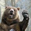 Medved Zeleny