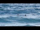Спасение девушки на пляже в Пафосе