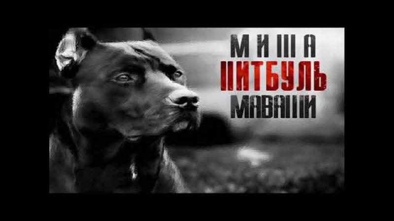 Миша Маваши - Питбуль | Весь Альбом