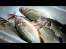 Курсы элементарной кулинарии Гордона Рамзи / Gordon Ramsays Ultimate Cookery Course 01х 02