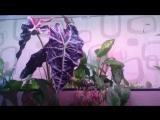 Свет для растений своими руками