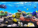 Подводный мир Красного моря - невероятная красота!