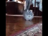 Эту кошку зовут Машка. Но мужики зовут её Приора..