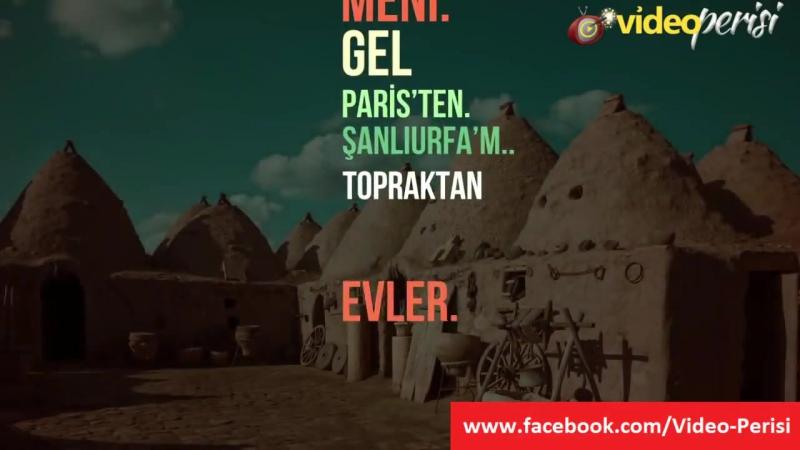Hayki