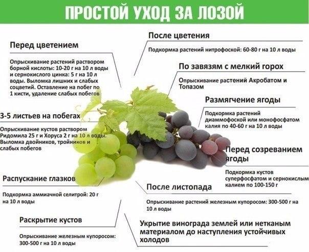 https://pp.userapi.com/c837130/v837130698/3387e/uov8JAt-Wuw.jpg