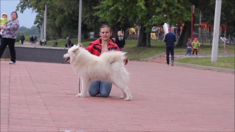 Белый Волк Яна смотреть онлайн без регистрации