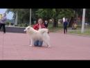 Белый Волк Яна