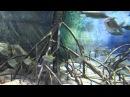 [HD] Mangrove @ S.E.A. Aquarium [16/17]