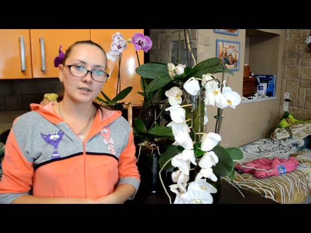 Самый лучший способ посадки орхидей Фаленопсис Часть 2 Закрытая система