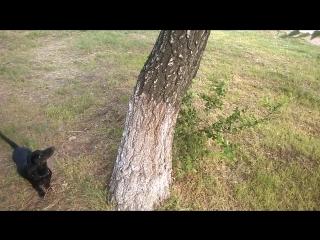 охота на кота