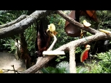 Зоопарк,  летучие собаки 2