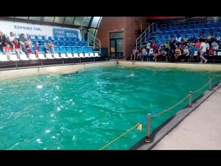 ростовский дельфинарий 28 05 17