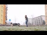 Dogfrisbee training with Charlie-Australian Shepherd