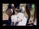 BBC Заповедник в дебрях Африки 07 серия Реальное ТВ животные 2005