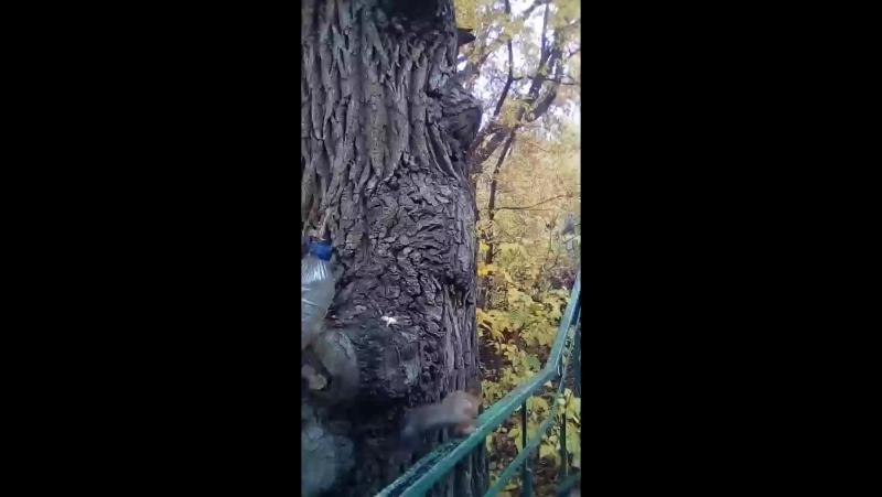 Оксана Никульшина-Бирюков... - Live