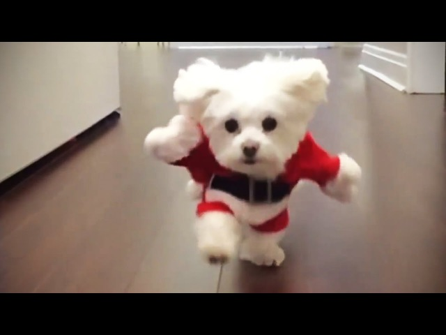 Funniest DOGS IN COSTUMES 2017 Funny Pets