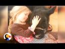 Girl Sneaks Cow Into Home | The Dodo