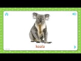 Koala - Wild Animals - Flashcards for Kids