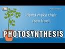 Photosynthesis Photosynthesis in plants Photosynthesis Biology basics for children elearnin
