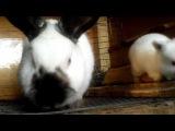 Почему гранулированный корм лучше зерна для кроликов