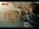Жители высотки жарят грибы, собранные со стен