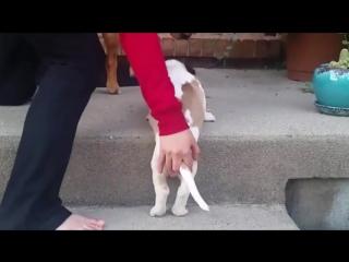 Неуклюжие щенки