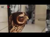 няшная сова