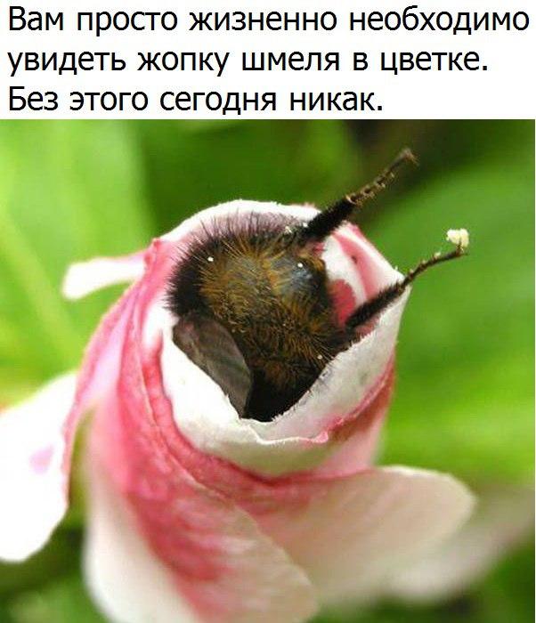 https://pp.userapi.com/c837132/v837132605/350d0/rYlyyGtFHp0.jpg