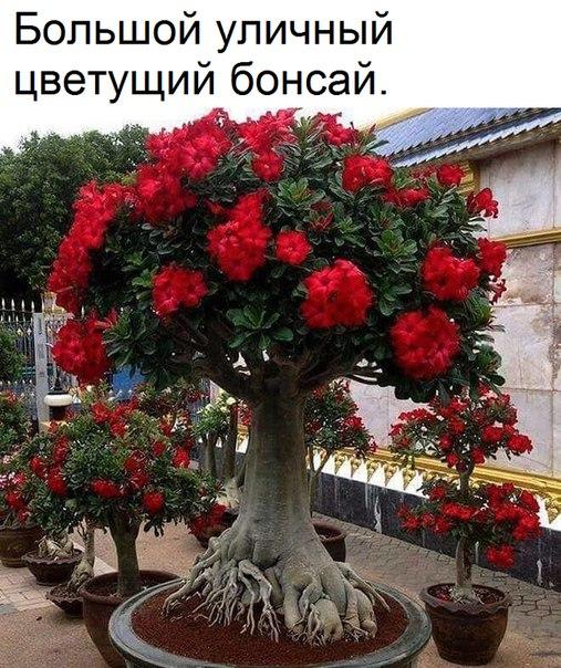 Фото -6136139