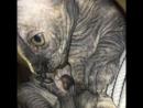 Котёнок сосет пальчик задней лапки 😂