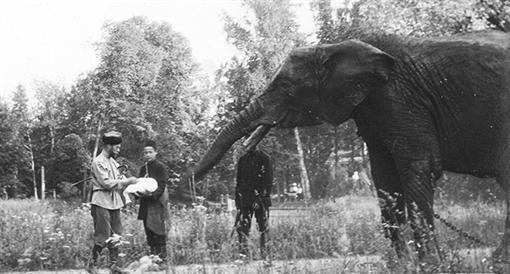 Императорский слон. Царское Село. Санкт-Петербург. Российская империя.