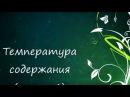 ЦИКЛАМЕН (Cyclamen)Температура содержания (часть 1)