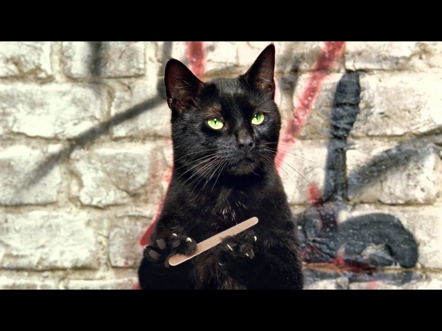 Cravendale - Cats with Thumbs - ARLA