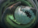 Самая большая змея в мире Документальное кино