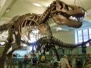 Amerika Doğal Tarih Müzesi Gezimden Dinazorlar, Dinosaurs at Museum of Natural History