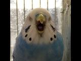 Instagram video by RIKO Jan 8, 2017 at 931am UTC