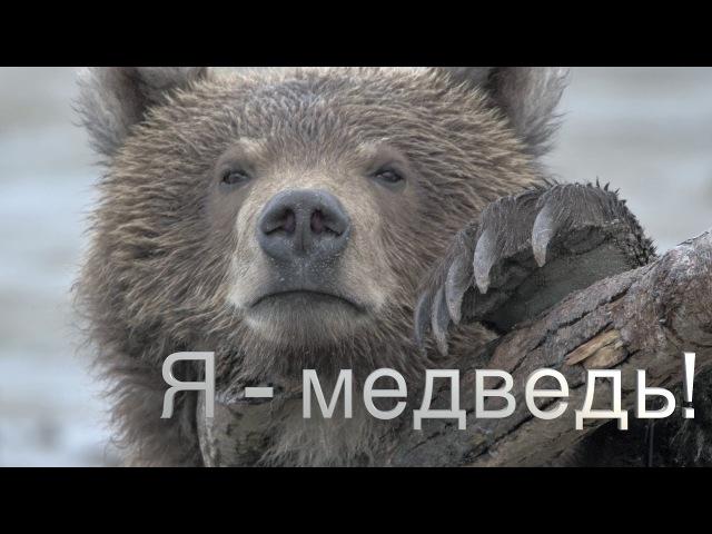 ТизерЗнакомьтесь, бурый медведь Миша, с Камчатки.Я - медведь!0Природа для самых маленьких.
