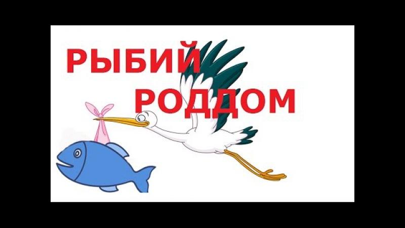 Рыбий роддом Fish hospital Ancistrus dolichopterus