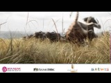 «Джунгли кітабы» қазақша трейлер.