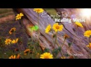 Healing And Relaxing Music For Meditation (Path Of Love) - Pablo Arellano