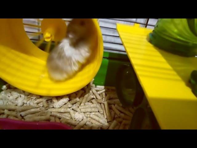 Masha_terl video