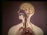 Причины острой дыхательной недостаточности  Acute respiratory failure