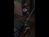 Кузя, воздушный акробат, 7 мес.