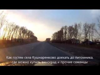 Как гостям Кушнаренково доехать до питомника, где можно купить виноград и прочие саженцы