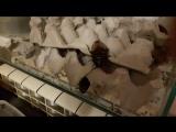 Гладиаторские тараканы, реквием до Мадагаскару.