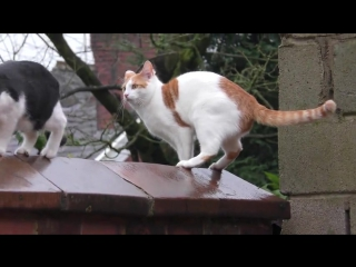 Cats Jump At Same Time, Land Directly On Top Of Each Other