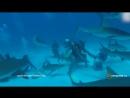 Стая акул окружила ученых у Багамских островов